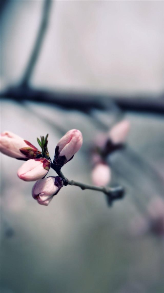 Macro Pink Blooming Tree Flowers iPhone 8 wallpaper