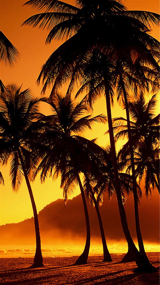 Nature Sunset Beach Coconut Grove  iPhone 8 wallpaper