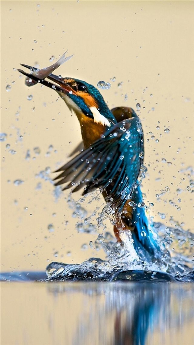 Kingfisher Catching Fish iPhone 8 wallpaper