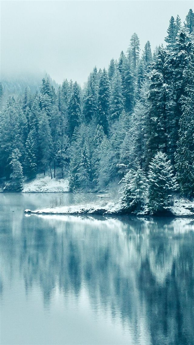 Pine Forest Lake Snow iPhone 8 wallpaper