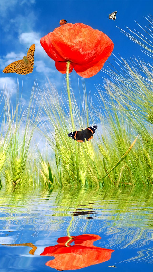 Spring Poppy Flowers And Butterflies iPhone 8 wallpaper