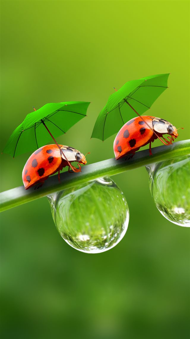 Nature Beetle In Umbrella On Dew Leaf iPhone 8 wallpaper