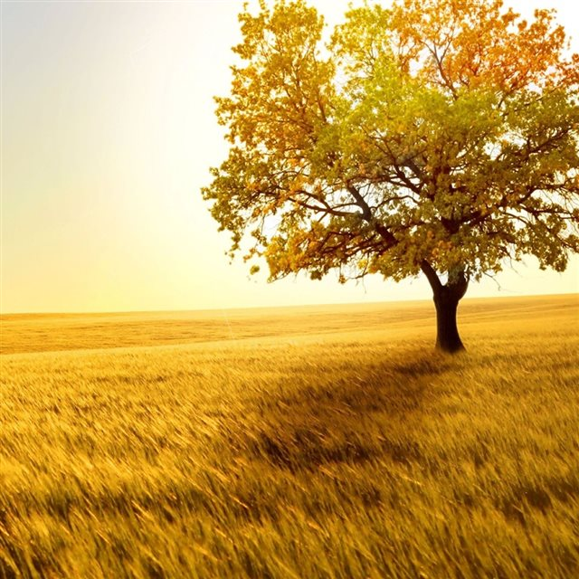 Nature Golden Tree On Grassland iPad wallpaper