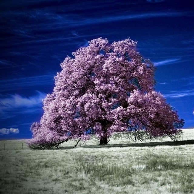 Scenic Infrared Trees iPad wallpaper