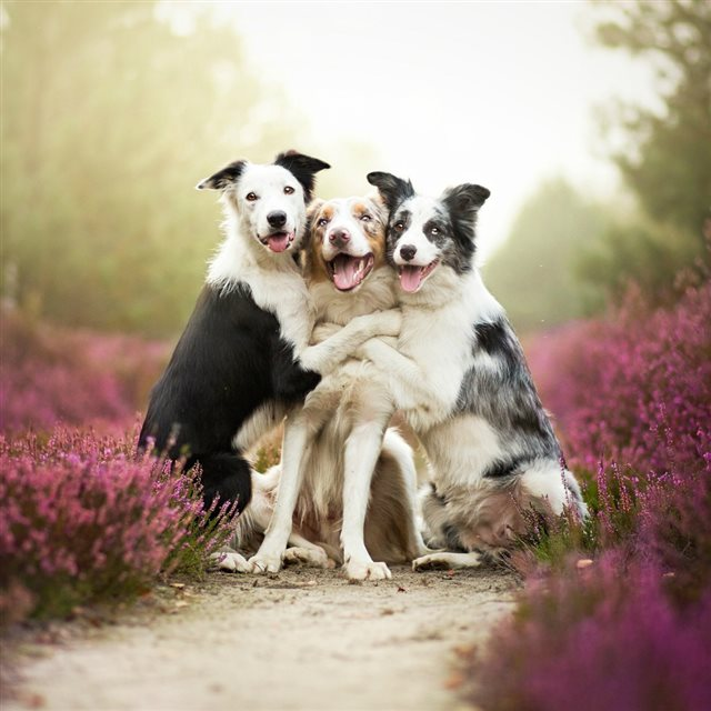Funny Dog Friends Ipad Wallpapers Free Download