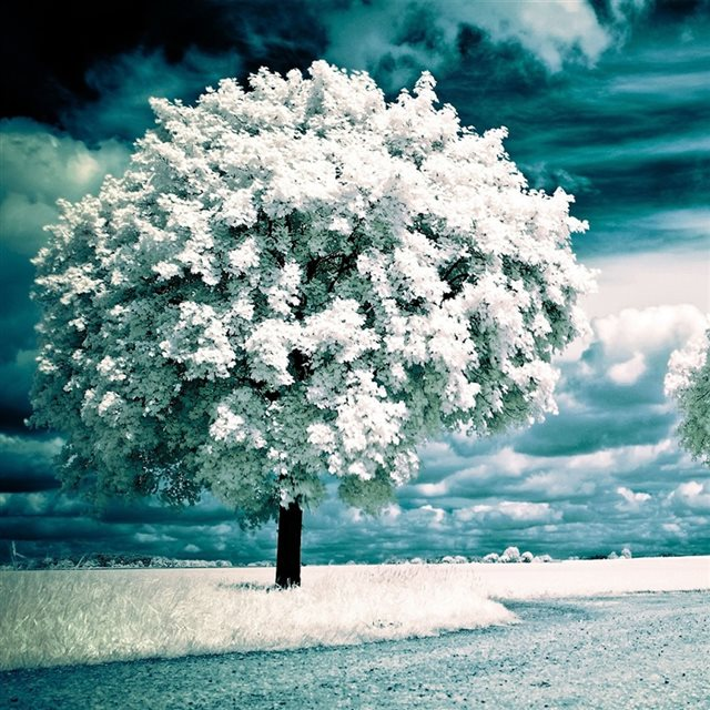 Infrared Photography Trees iPad wallpaper