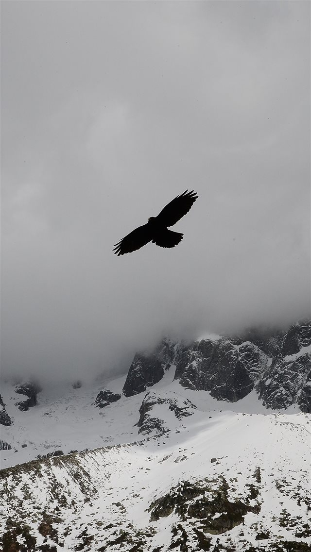 Eagle Flying Over Winter Snow Mountains iPhone 8 wallpaper
