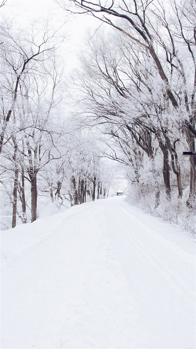Winter Road Romantic Nature Snow White iPhone 8 wallpaper