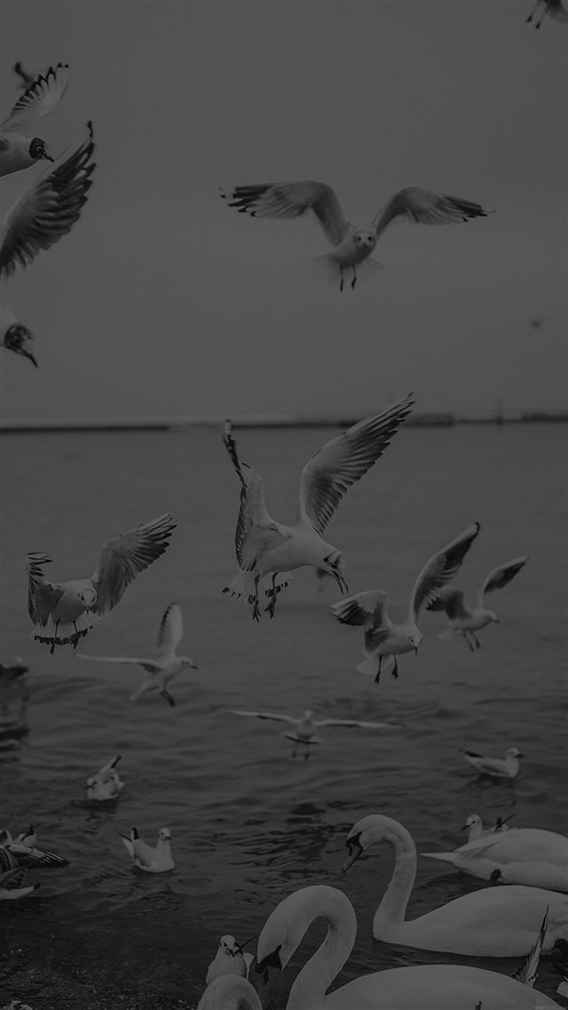 Seagull Sea Beach Port Black Nature Animal iPhone 8 wallpaper