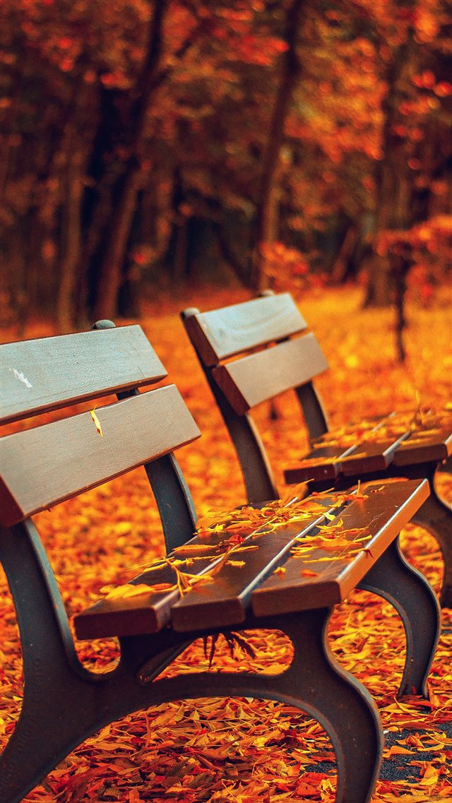 Nature Autumn Fall Leaves On Roadside Bench iPhone 8 wallpaper