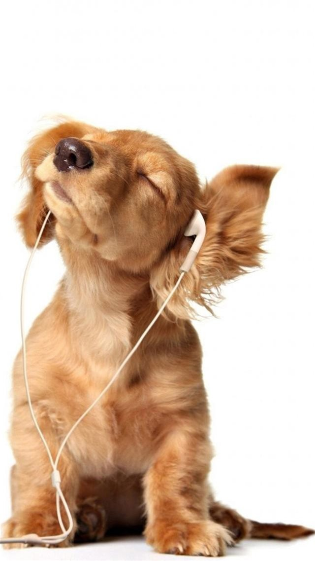 Intoxicated Listen To Music Cute Puppy Iphone 8 Wallpapers Free Download
