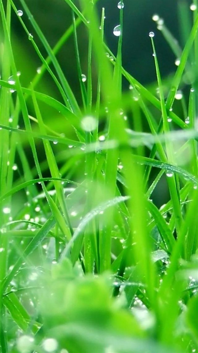 Fresh Dew Grass Leaves After Rain iPhone 8 wallpaper