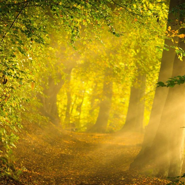 Moring Sunshine In The Forest iPad wallpaper