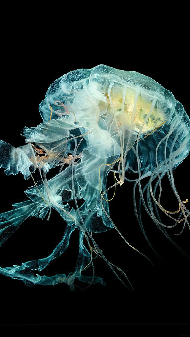 Nature Fantasy Undersea Jellyfish Art iPhone 8 wallpaper