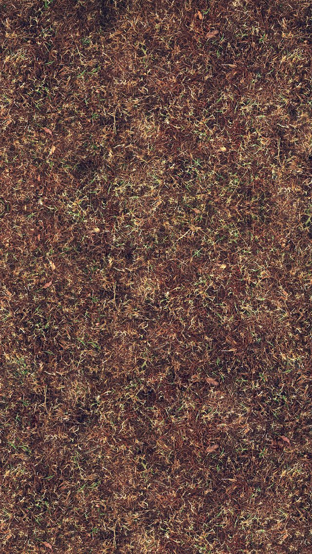 Wither Orange Grass Texture Pattern Background iPhone 8 wallpaper