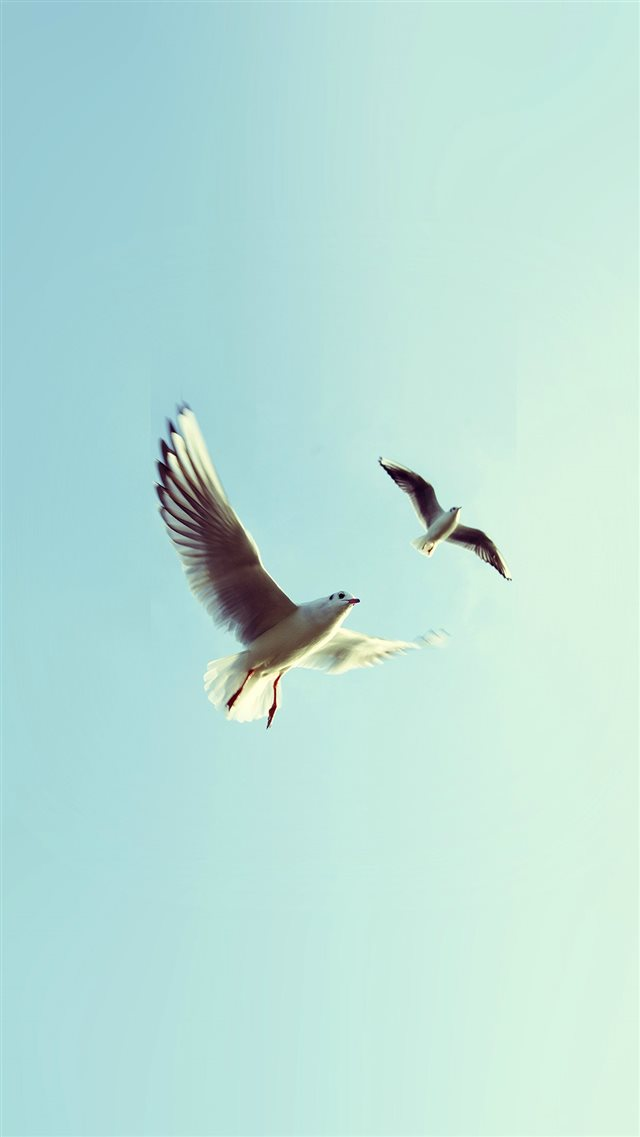 Pigeons Bird Fly Sky Animal Nature Minimal iPhone 8 wallpaper