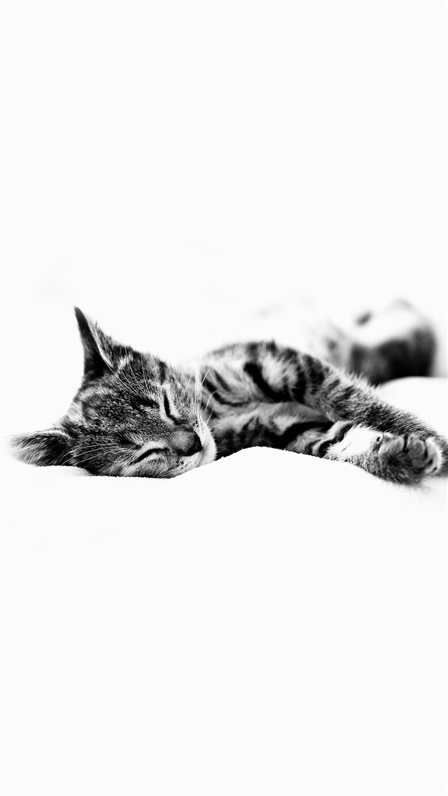 Sleepy Cat Kitten White Animal iPhone 8 wallpaper