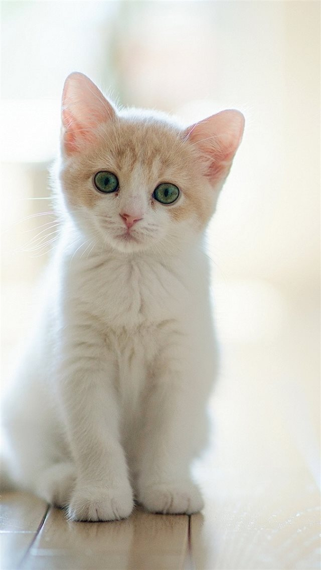 Cute Lovely Staring Kitten Cat iPhone 8 wallpaper