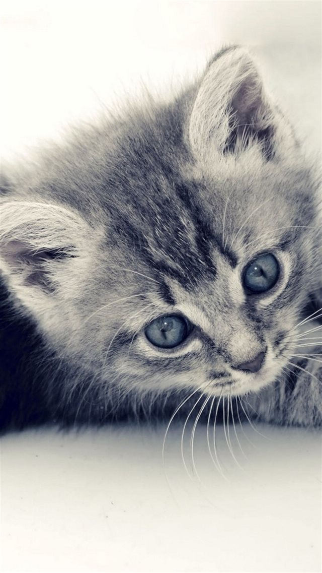 Cute Cat Kitten Macro Gray Background iPhone 8 wallpaper