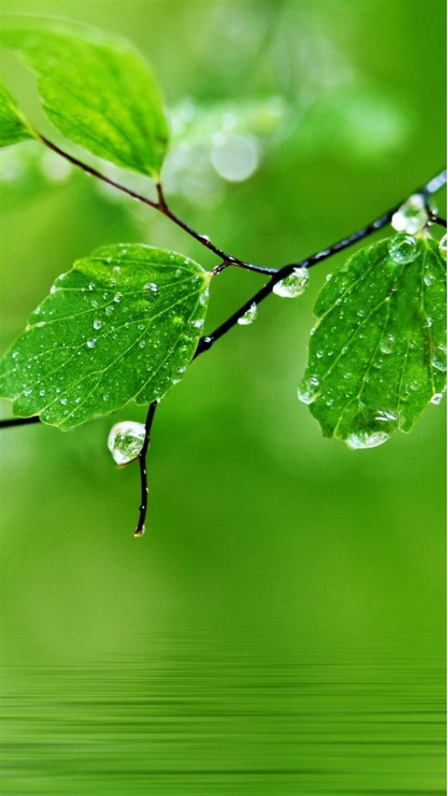 Pure Fresh Dew Leaf Branch Over Water iPhone 8 wallpaper