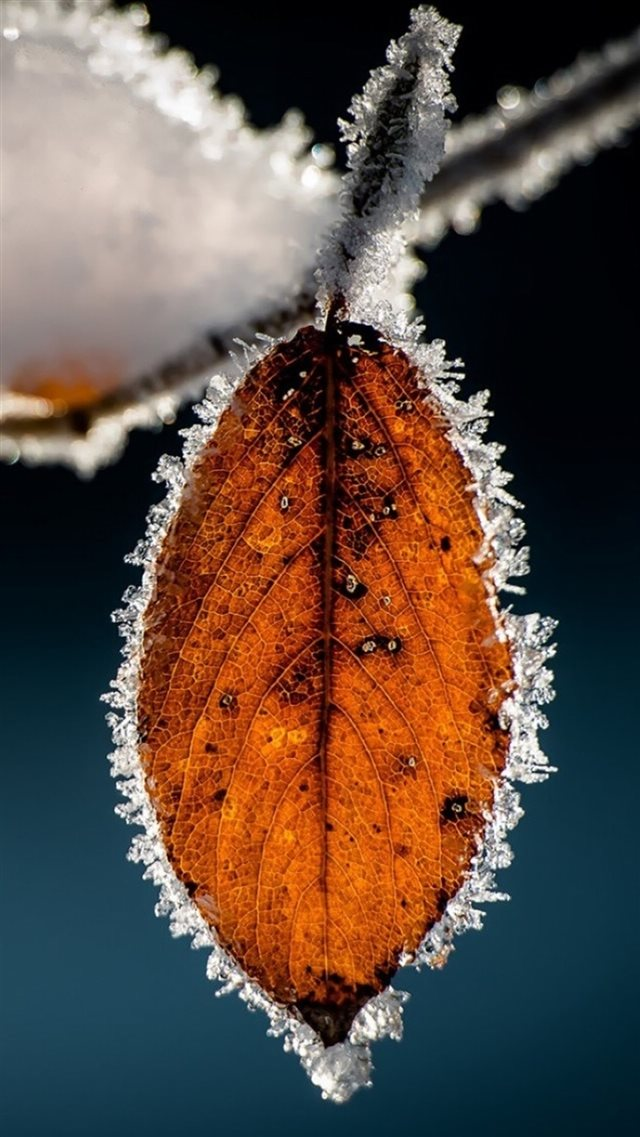 Winter Icy Orange Leaf Macro iPhone 8 wallpaper