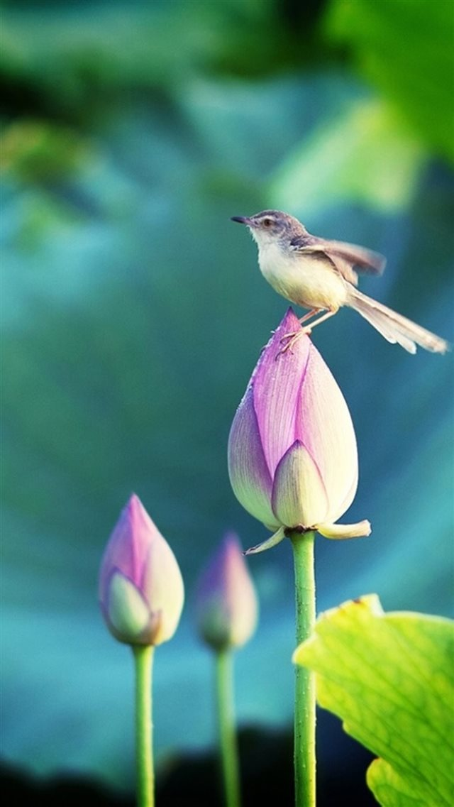 Bokeh Pond Lotus Bud Bird  iPhone 8 wallpaper