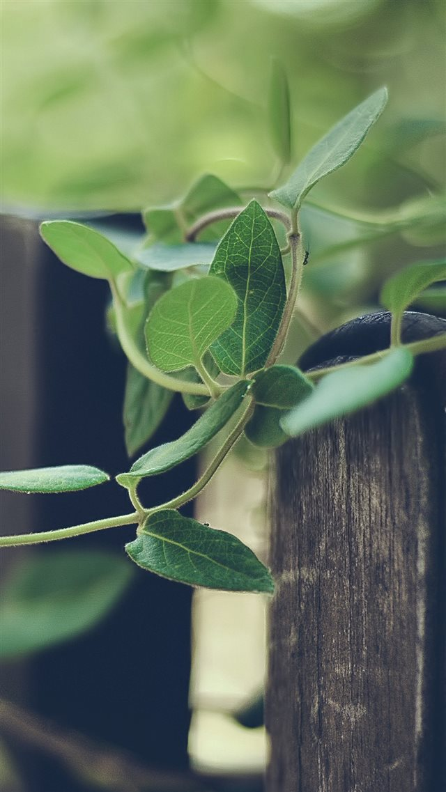 Nature Plant Rattan Climbing Fence iPhone 8 wallpaper