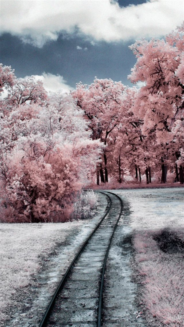 Nature Winter Through Pink Woods Iphone  Wallpaper