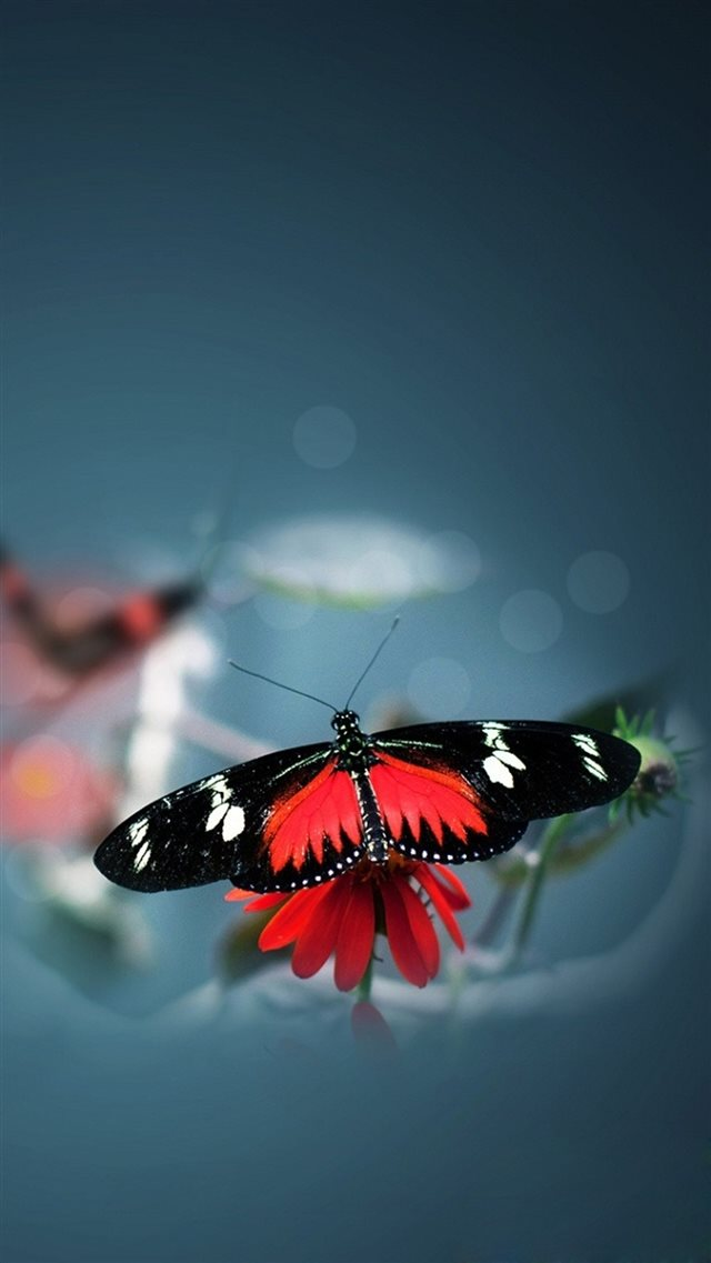 Nature Beautiful Butterfly Animal Flower Water Blur Iphone 8