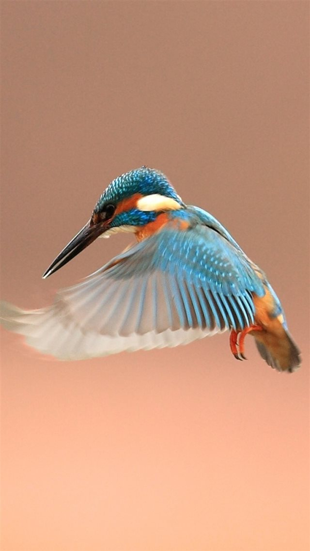 Beautiful Flapping Kingfisher Bird iPhone 8 wallpaper
