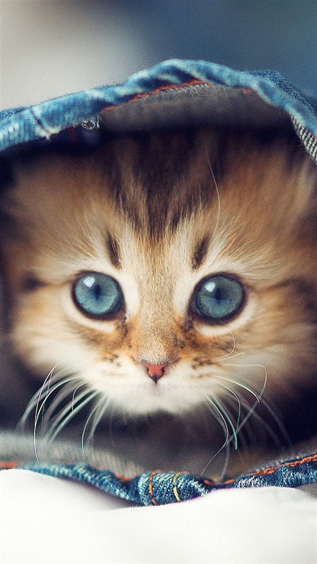 Cute Cat In Jeans pants iPhone 8 wallpaper