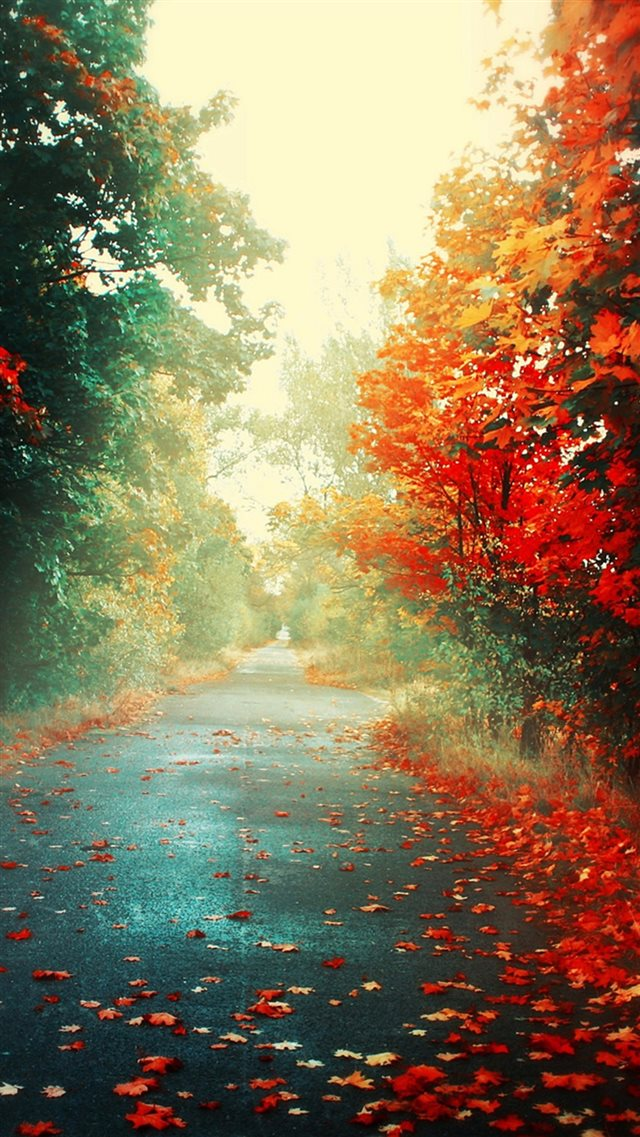Nature Autumn Red Maple Leafy Road iPhone 8 wallpaper