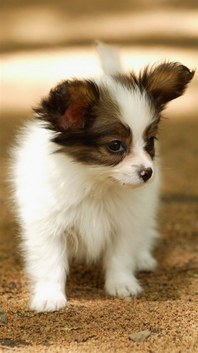 Cute Lovely Puppy Walking Dog Animal iPhone 8 wallpaper