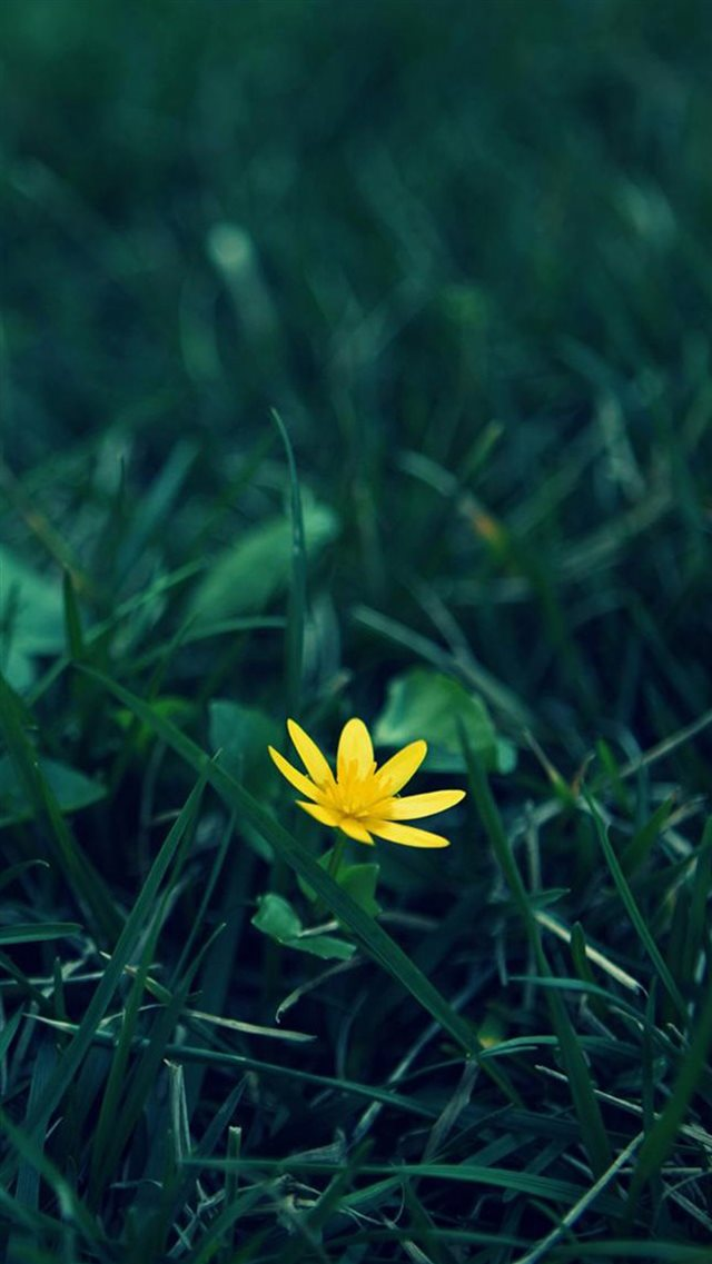 Nature Little Yellow Flower Green Grassland Blur Background iPhone 8 wallpaper