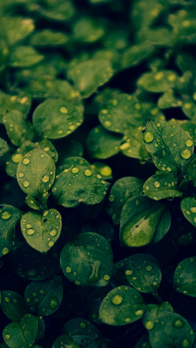 Fresh Dew Green Leafy Branch iPhone 8 wallpaper