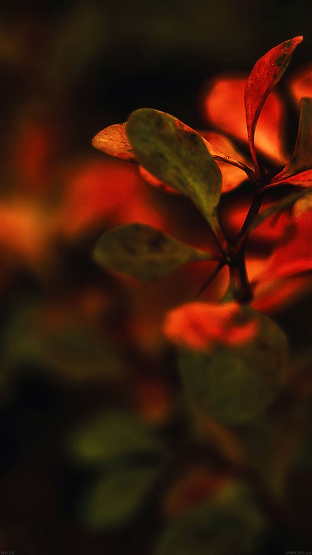 Nature Branch Leaves Red Sunset Blur iPhone 8 wallpaper