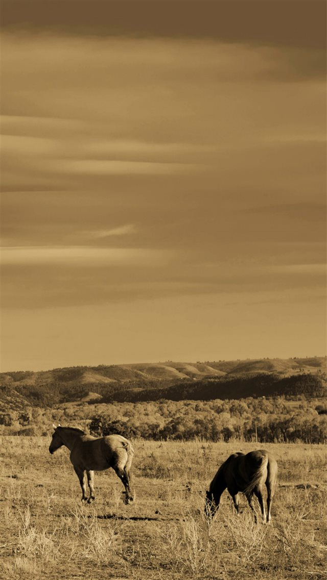 Wild Grassland Horse Animal IPhone 8 Wallpaper