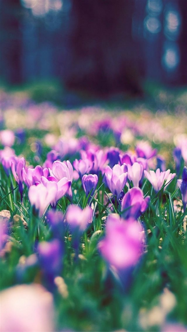 Nature Spring Purple Blossom Flower Garden Bokeh Iphone 8