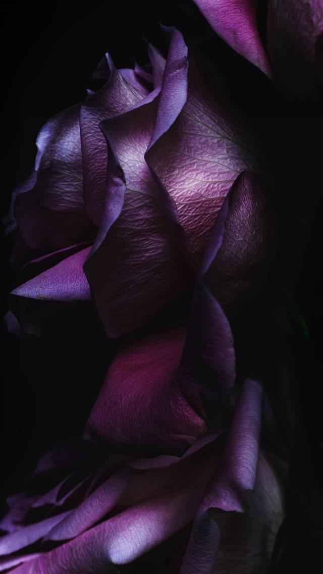 Ios9 Purple Rose Flower Art Wallpaper Iphone 8 Wallpapers
