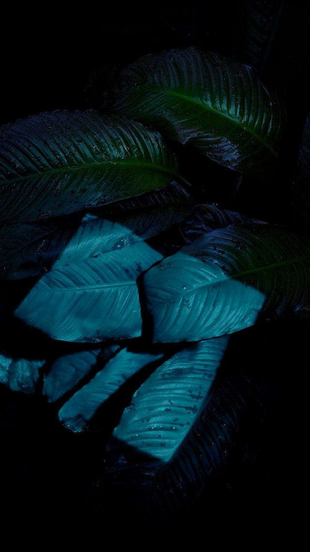 Dark Wet Rainy Leaf Macro iOS9 Wallpaper iPhone 8 wallpaper