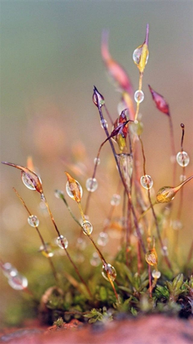 Nature Dew Plant Leafy Grass Blur  iPhone 8 wallpaper