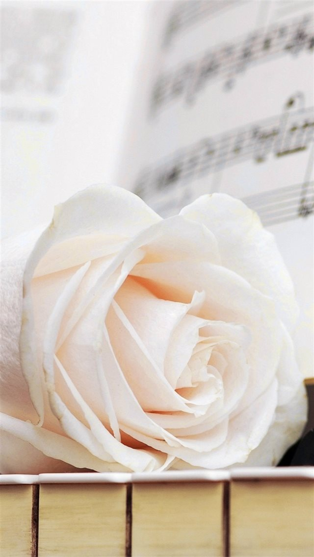 Pure White Rose Music Note iPhone 8 wallpaper