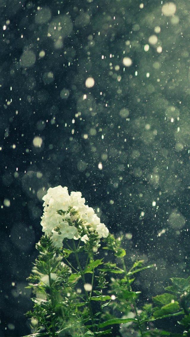 Dreamy Blowing Rain Beautiful White Flower Branch Iphone 8 Wallpaper