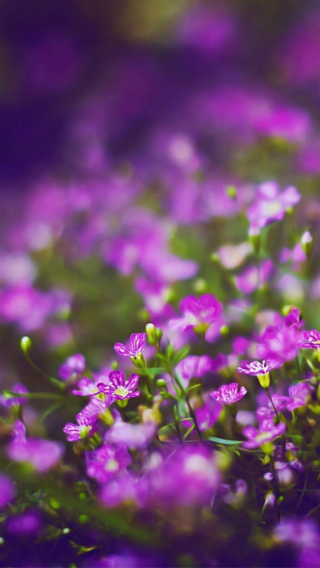 Beautiful Purple Flower Field Blur Bokeh iPhone 8 wallpaper