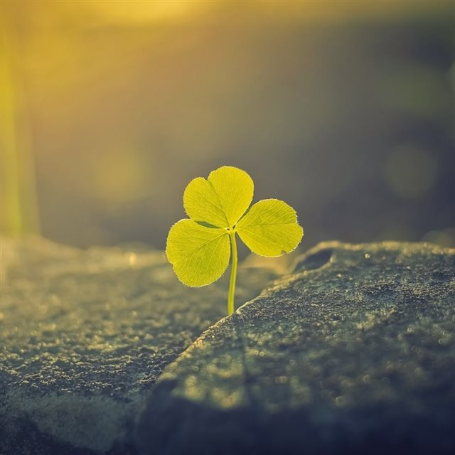Lucky Flower Stone Growing Morning Sunlight iPad wallpaper