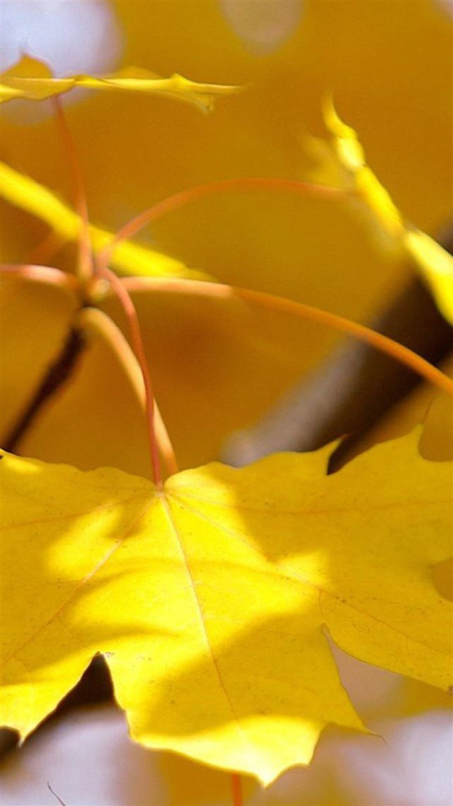 Nature Fall Autumn Yellow Leaf Macro iPhone 8 wallpaper