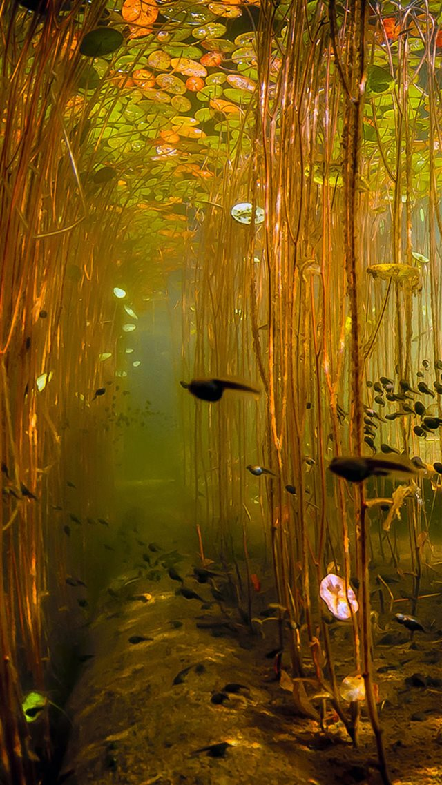 Water Tadpoles Underwater iPhone 8 wallpaper