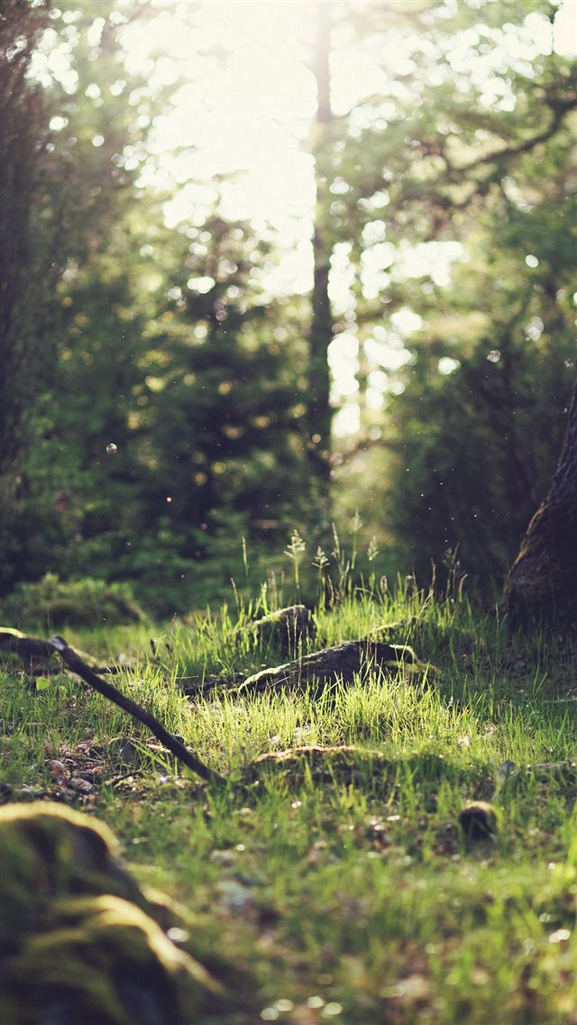 Forest Green Nature Tree iPhone 8 wallpaper