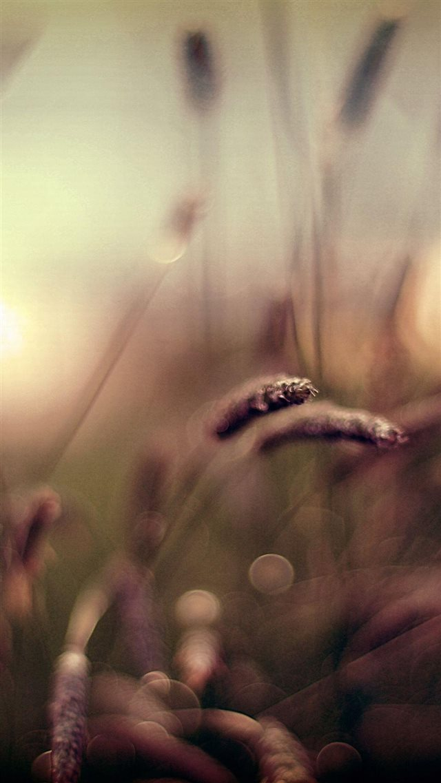 Brown Wheat Field Bokeh Scenery iPhone 8 wallpaper