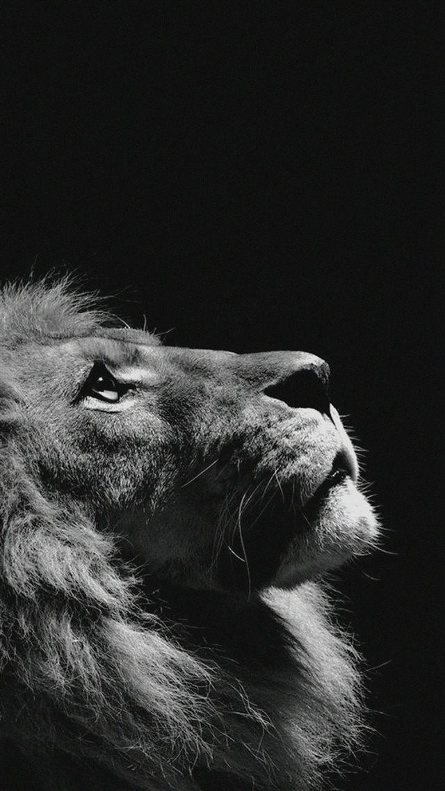 Lion Looking Sky Animal Nature Dark Photo iPhone 8 wallpaper